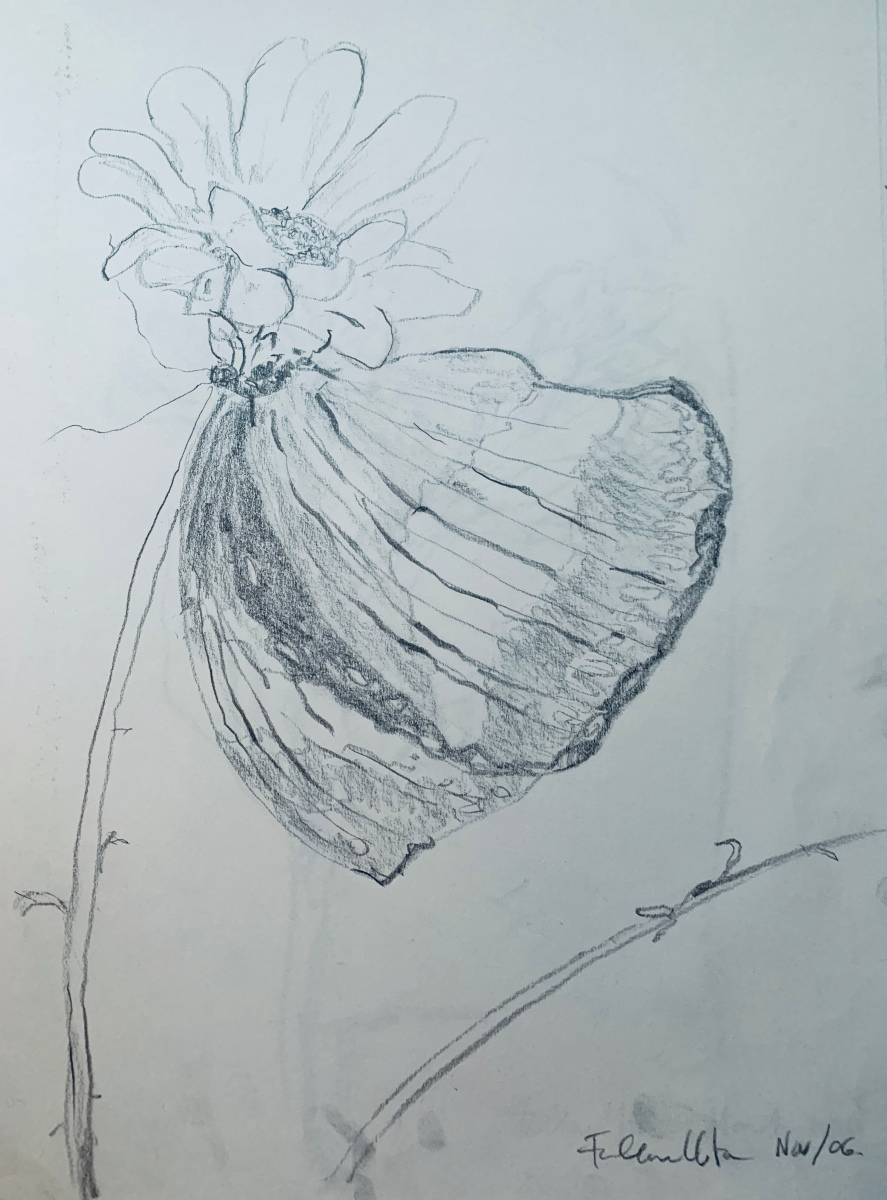 Butterfly On A Daisy (2006), pencil, paper, art, drawing, sketch, #ValentinesDay, #ValentinesDay2020,